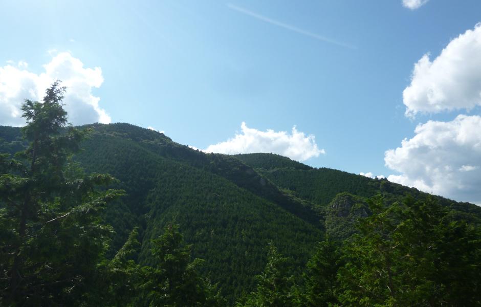 森林・砕石資源調査
